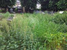 weeds on the allotment