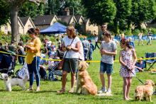 dog show participants line up for judging