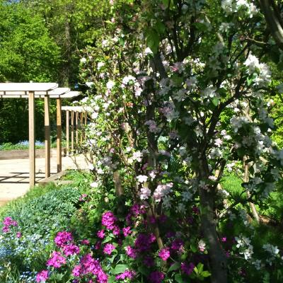 apple blossom with honesty and forget-me-nots