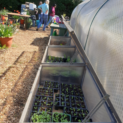cold frames full of seedlings