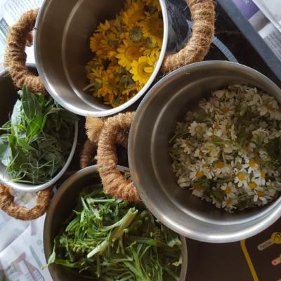boiling up plants for dyeing
